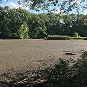 Mud flats on Horseshoe Lake in Shaker Heights