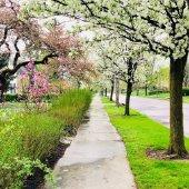 Free Front Yard Tree Program graphic