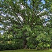 2021 Heritage Tree Awards