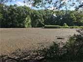 Mud flats at Horseshoe Lake Park.