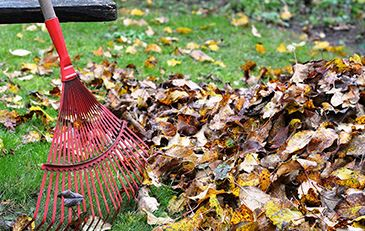 Photo of fall leaves and a rake